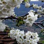 Cuidados del huerto en el mes de Marzo